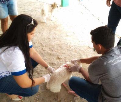 Vacina animais
